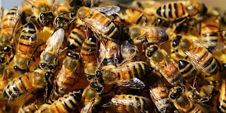 Backyard Honey @ Willsmere Station Community Garden tickets
