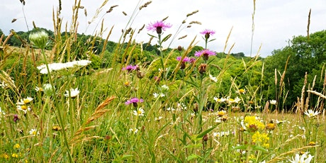 Identifying Wild Flowers at Woolley Firs tickets