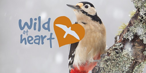 Bird Ringing at Woolley Firs