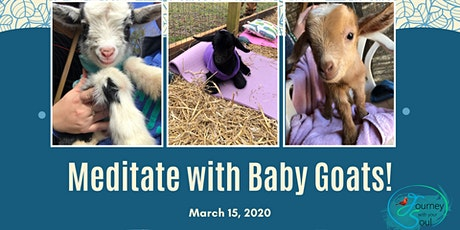 Meditate with Baby Goats! tickets
