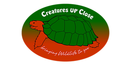 Creatures Up Close