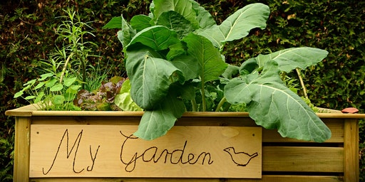 Garden School Series: Raised Beds
