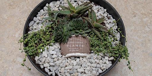 Succulent in a Pot Workshop