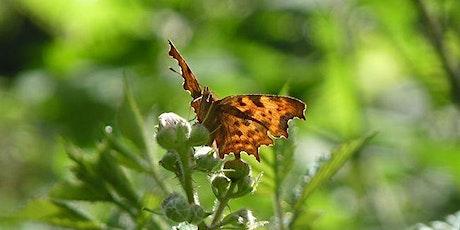 Rusland Horizons Talk: Butterflies of the Rusland Valley tickets