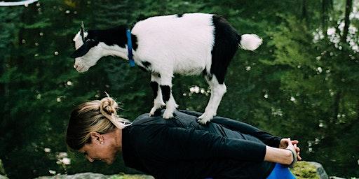Charity Goat SNUGGLE (MSPCA at Nevins Farm)