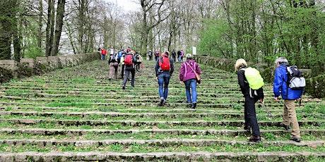 """So,12.07.20 Wanderdate """"Single Wandern auf dem Philosophenweg zum Heiligenberg! für 30-49J"""" Tickets"""