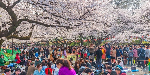 Hanami -- Baltimore's Cherry Blossom Celebration