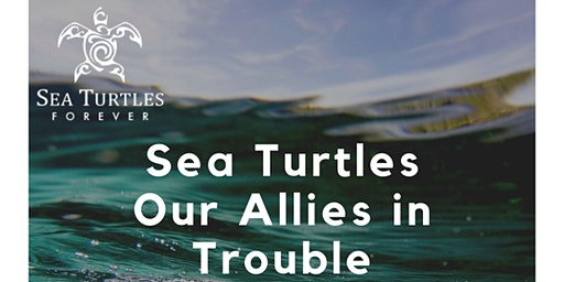 Sea Turtles: Our Allies in Trouble
