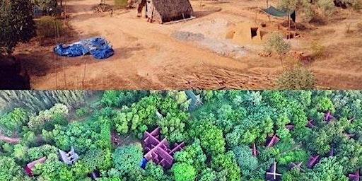 Reforestation in Auroville