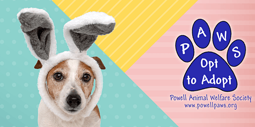 PAWS 2020 Spring Pet Photos