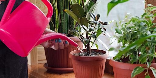 Indoor Plant Care 101 Talk