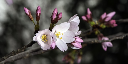 Blooming in Adversity: Resilience, Strength, and Wholeness