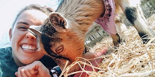 Goat Yoga Bham-Snuggles & Cuddles
