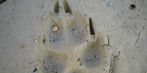 Mammal Tracks and Signs