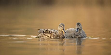 Wild Challenge Wednesday - Brilliant Birds at Roath Park Lake tickets