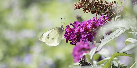 Wild Challenge Wednesday – Pollinator Party at Bute Park tickets