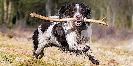 Doggie PHOTO EVENT tickets