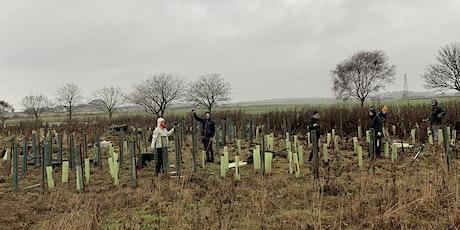 Bat's Wood Tree Planting, Saturday March 7th tickets