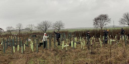 Bat's Wood Tree Planting, Saturday March 7th