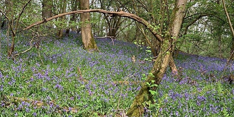Bluebell Mini Photo Session tickets