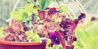 Salad Bowl Workshop