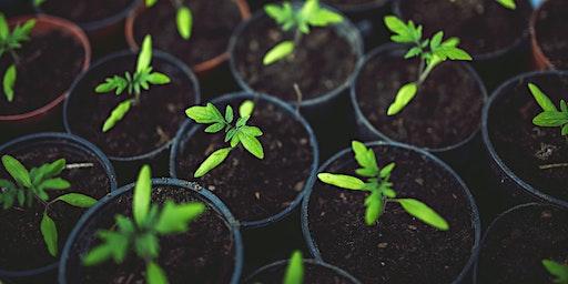 Vegetative Propagation / Ymlediad Llystyfol