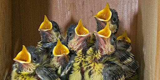 Bird Box Making