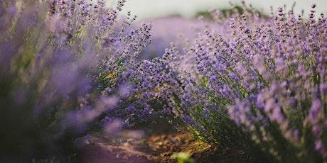Sensory Gardening Course / Cwrs Garddio Synhwyraidd tickets