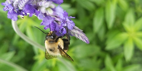 Downsview Park's A Walk in the Park: The Buzz About Bees tickets