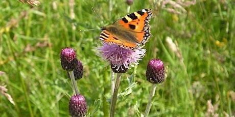 St Cyrus Minibeast and Pollinator Hunt tickets