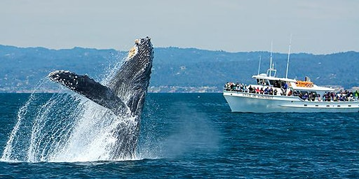 Gold Star Family - Whale Watching Tour