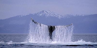 Alaska Unveiled -