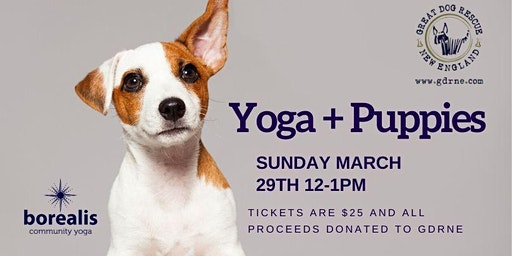 Yoga + Puppies
