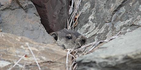 iNaturalist Park Scavenger Hunt tickets