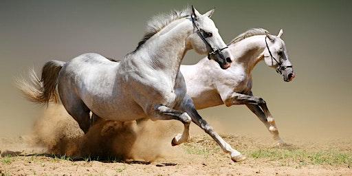 Soirée de présentation de la formation : Horses & Coaching