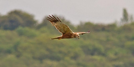 Autumn Migration in North Kent tickets