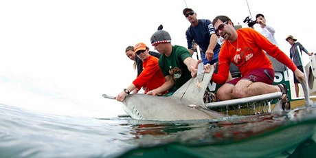 Everything You Know about Shark Conservation Is Wrong tickets