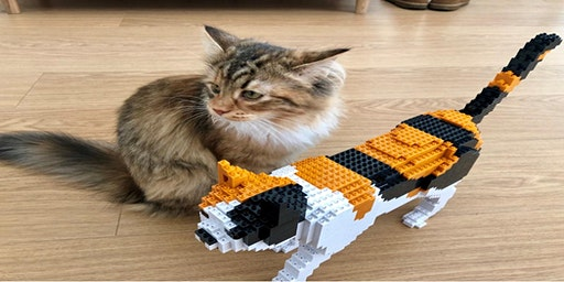 Mechanical Lego Cat Making Workshop at Torquay Museum