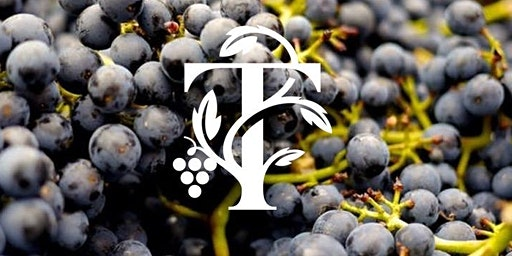 Explore our Winery - Tour & Tasting Session