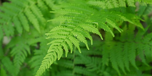 Summer Fern Walk