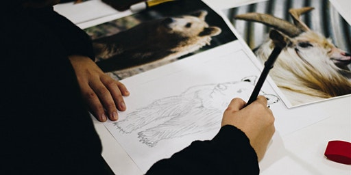 Art class (learn to draw)