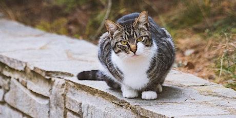 Cat Trapper Training Program tickets