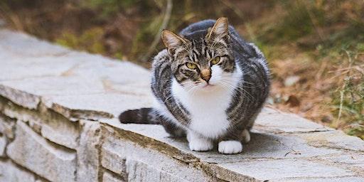 Cat Trapper Training Program