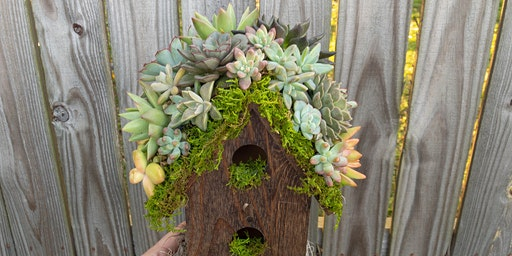 Make-N-Take: Succulent Topped Birdhouse