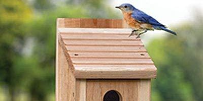 First Sunday Guided Nature Tour: Build-Your-Own Bluebird House