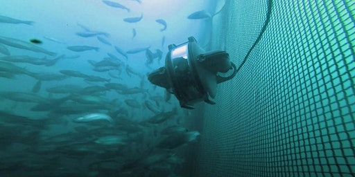Ocean Connector: Fish Farms - Inspections Below the Surface