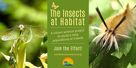 The Insects at Habitat in 2019 - Help Us Help Them in 2020 tickets