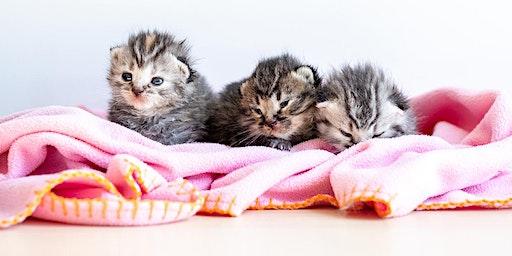 TRAINING SESSION - Neonatal program for orphaned kittens