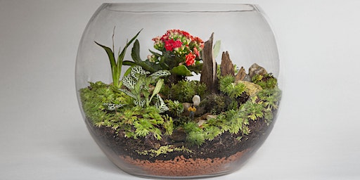 Terrarium Thursdays