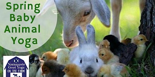 Spring Baby Animal Yoga: Namaaaste Goat Yoga on the Farm